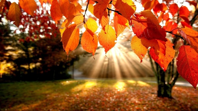 Autumn-Leaves-in-sunshine